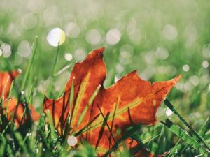 All Green Lawn Treatments - Autumn Lawn Care